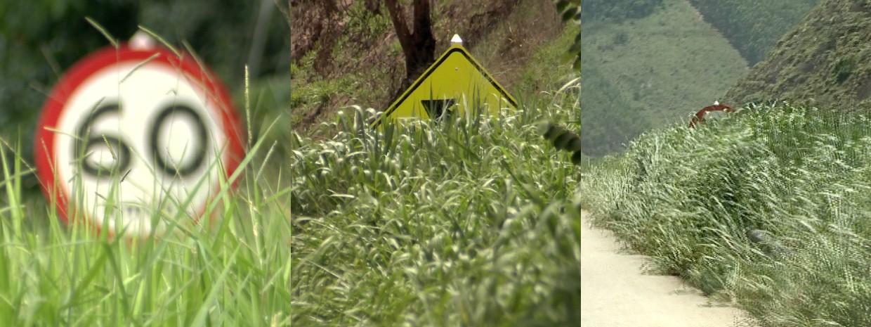 Placas estão cobertas por mato na BR-262, no Espírito Santo (Foto: Reprodução/ TV Gazeta)