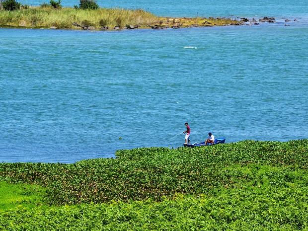 Nem só de encantos vive o nosso rio. Baronesas estão sufocando o Velho Chico e dificultando várias atividades (Foto: Caio Alves/ Arquivo pessoal)
