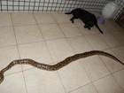 Cobra de estimação de 2,7 metros é achada no Ceará três dias após 'fuga'