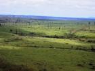 Falso plano de manejo permite venda de 6,5 mil m³ de madeira no Pará