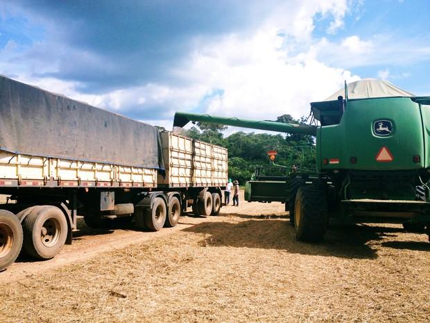 Foi registrado um crescimento de 602,96% no volume de produção, segundo dados do IBGE (Foto: Franciele do Vale/G1)