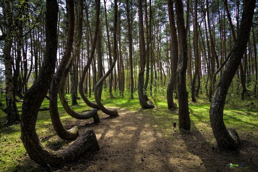 Fotógrafos e florestas (Foto: Faberovsky / Divulgação)