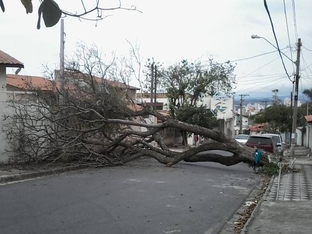 Árvore impediu acesso de veículos na Vila Barão (Foto: Ricardo Aracno/TEM Você)