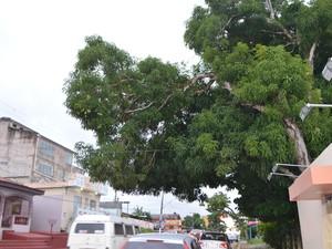 Mangueiras podem interferir no fornecimento de energia, diz CEA (Foto: Cassio Albuquerque/G1)