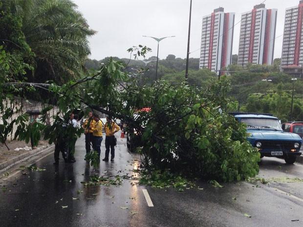 Cam a queda da árvore o trânsito ficou lento  na Avenida Pedro II  (Foto: Walter Paparazzo/G1)