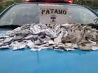 Polícia detém dois suspeitos com papelotes de cocaína em Friburgo, RJ