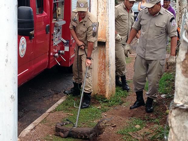 Jacaré foi capturado na Avenida Alzira Santana, em Várzea Grande (Foto: Bruno Pacola/ VC no G1 )