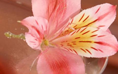 Para a primavera: faça drinques com flores