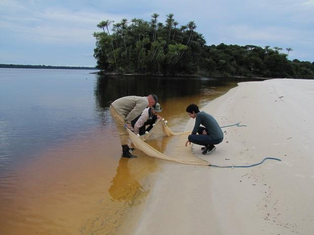 Pesquisadores capturaram o Cyanogaster com auxílio de rede (Foto: Arquivo Pessoal/Manoela Marinho (USP))