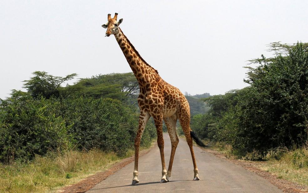 Girafa anda em estrada no Parque Nacional de Nairobi em foto de setembro de 2014  (Foto: Reuters/Thomas Mukoya/File Photo)