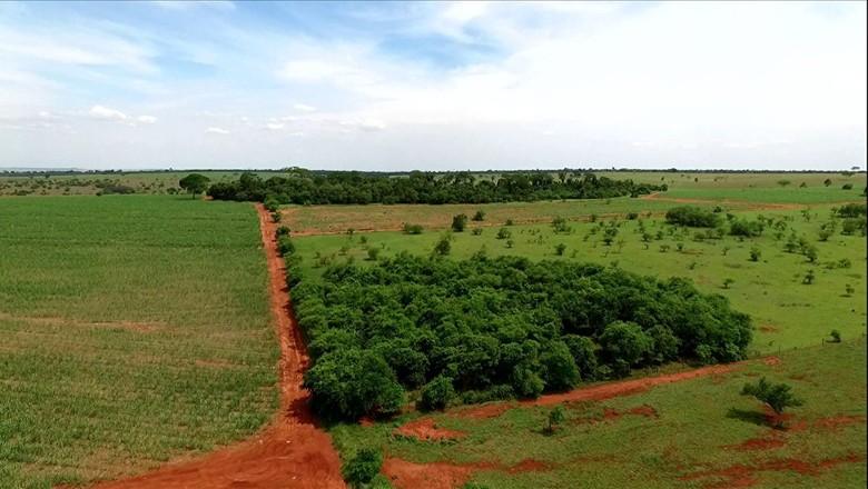 tv-mata-atlantica-projeto-pecuarista-paranapanema-floresta (Foto: Reprodução/ TV Globo)