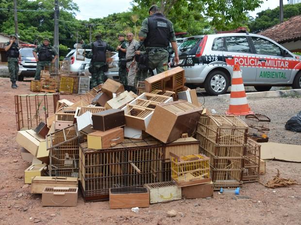 Cerca de 140 aves foram resgatadas (Foto: Walter Paparazzo/G1)