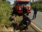 Anta é resgatada após ser atropelada na rodovia MG-188, em Unaí