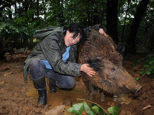 Em 2011, uma agricultora da região de Dordogne, na França, foi multada em 200 euros (R$ 520) por criar havia 11 anos no quintal de casa uma porca selvagem, a qual ela apelidou de 'Mimine'  (Foto: AFP)