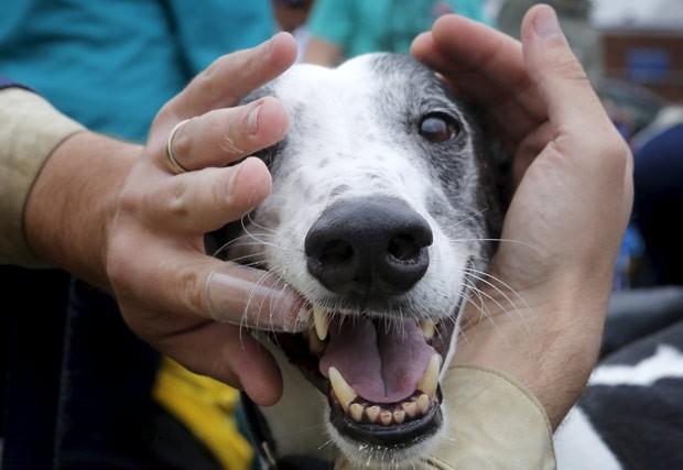 Dezenas de donos escovaram os dentes de seus cães simultaneamente em um festival canino em Somerville (Foto: Brian Snyder/Reuters)