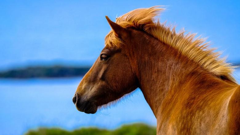 egua (Foto: Pexels)