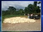 Seis mil frangos morrem em granja sem energia elétrica em Bofete