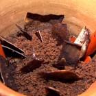 Faça a jardinagem de Chocolate (Rede Globo)