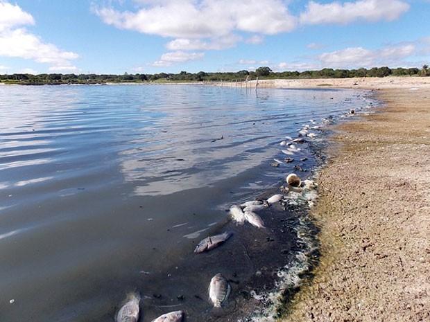 Lagoa no RN volta a registrar mortandade de peixes (Foto: Roberto Paixão)