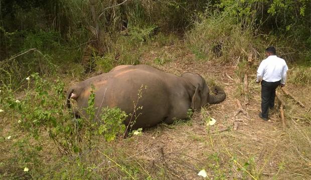 Quatro elefantes morreram atropelados por trem em Sri Lanka (Foto: Reprodução/Facebook/Upul S Adikari)