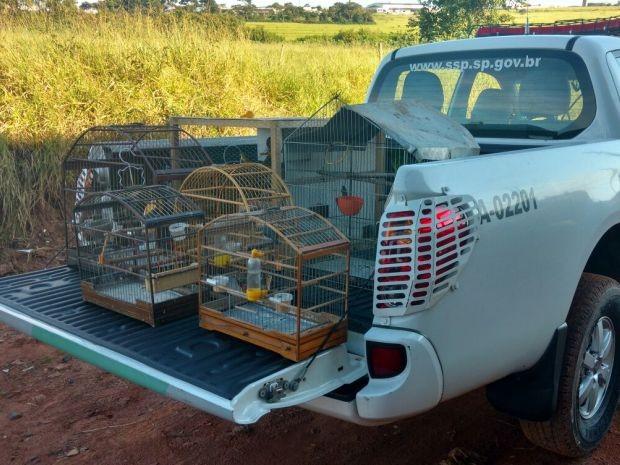 Pássaros foram apreendidos em Bauru (Foto: Divulgação / Polícia Ambiental)