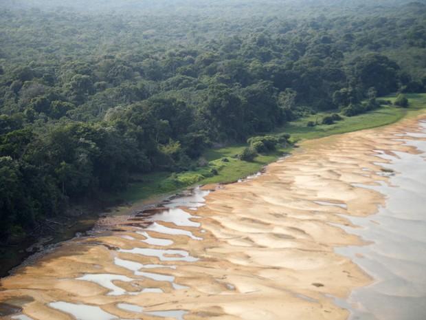 Praias onde tartarugas desovam pisoteadas por búfalos (Foto: Sedam/ Divulgação)