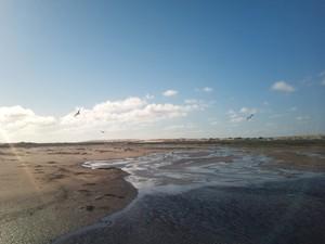 Aves migratórias encontram alimento no litoral gaúcho. Projeto Nossa Terra (Foto: Marcos Pereira/RBS TV)