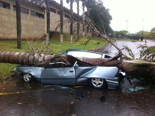 Árvore caiu sobre carro em Marília (Foto: Elias de Carvalho Vaz / Arquivo Pessoal)