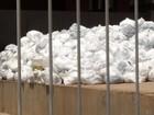 Lixo hospitalar volta a ficar acumulado em pátio do Hospital Geral de Palmas
