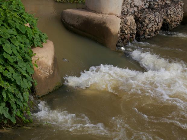 Peixes enfrentam a correnteza do reservatório da usina hidrelétrica (Foto: Gabriel Villela Torquato/Divulgação)