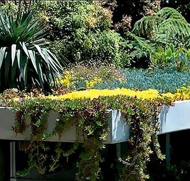 Teto com sistema modular Top Garden, mix de suculentas. R$ 160 o m², da Studio Terra (Foto: Divulgação/Sabesp)
