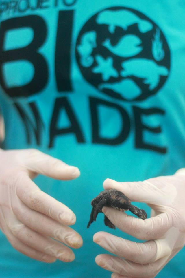 Projeto Biomade faz monitoramento dos ninhos de tartarugas marinhas (Foto: Gustavo Pereira/Arquivo Pessoal)