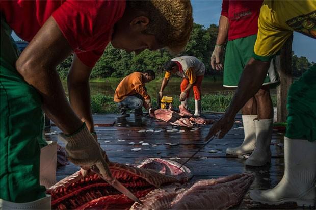 Amazonenses separam carne de pirarucus recém-pescados em Maraã, no oeste do estado (Foto: Mauricio Lima/The New York Times/POY Latam 2015)