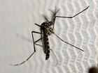 Cidade de MT decreta situação de emergência por epidemia de dengue