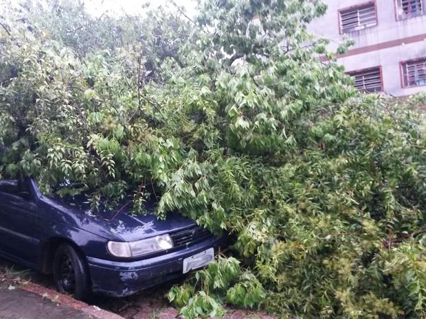 O veículo foi atingido pelo vegetal  (Foto: Dalmir Pinto/ RBS TV)
