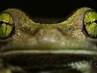 Fotógrafo do ES usa lente especial para registrar detalhes de insetos