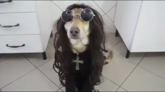 'Ninão mudou minha vida', diz dono de cachorro famoso na internet