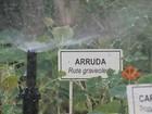 Moradores de Brasília usam quadras residenciais para o cultivo de hortas