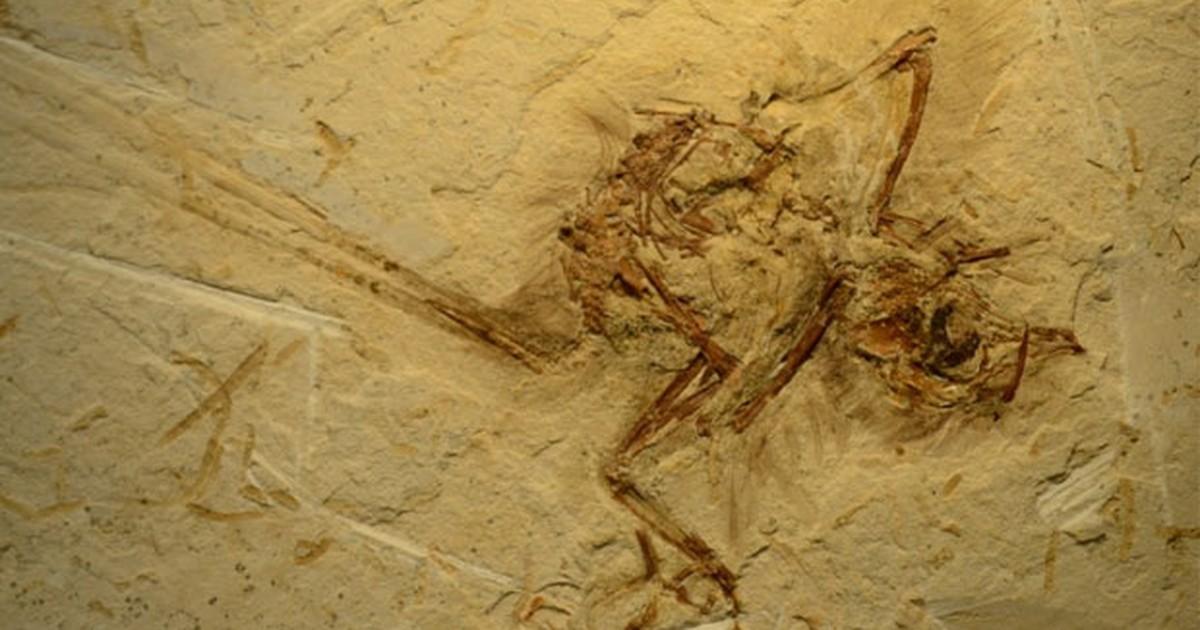 Fóssil de pássaro de 115 milhões de anos é descoberto no Ceará