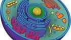 Entenda a estrutura celular e a função de cada organela (Reprodução)