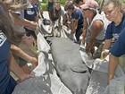 Manatis feridos por embarcações são devolvidos à natureza nos EUA