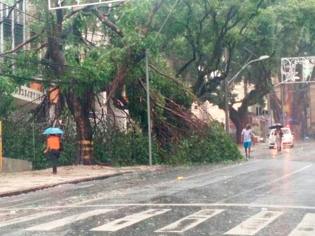 Árvore cai no centro de Salvador (Foto: Ramon Ferraz/TV Bahia)