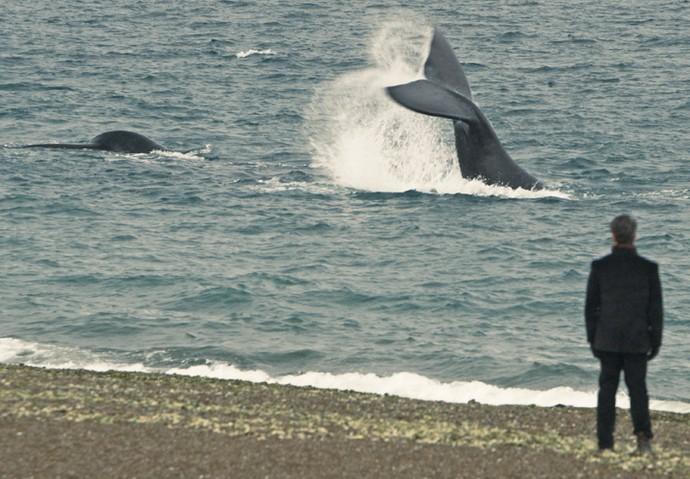 Selton Mello gravou perto de baleias de verdade na viagem da Patagônia (Foto: TV Globo)