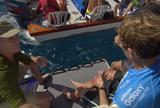 """Engolido por tubo, australiano se rala em corais e sai da �gua """"rebocado"""""""