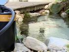 Designer cria filtro mais barato para aquários e descobre novo mercado