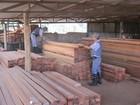Polícia apreende duas carretas de madeira ilegal em Votuporanga, SP