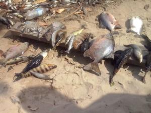 É o quarto registro de mortes de peixes em Ferreira Gomes (Foto: Moroni Guimarães/Arquivo Pessoal)