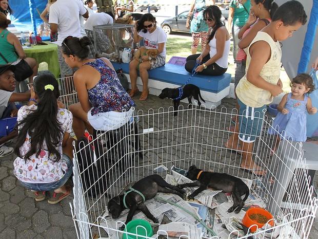 Feira de adoção animais em Macaé (Foto: Guga Malheiros/Secom Macaé)