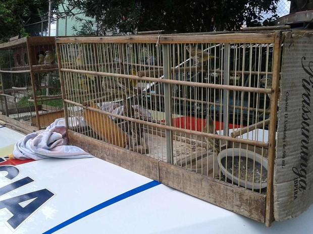 Polícia apreende 18 canários em posse de um suspeito de tráfico de animais, no DF (Foto: Polícia Militar/Divulgação)