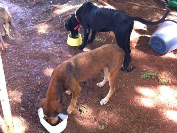 Animais para adoção se alimentando na Associação de Proteção Animal (Foto: Mariely Dalmônica / Arquivo Pessoal)